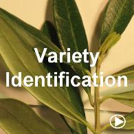 Variety Identification by DNA Fingerprinting